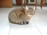 Pepí I.- krásný moureček, žil u domu dva roky, než nám ho kdosi otrávil. Přes veškerou snahu veterináře mi zemřel v náručí na svůj svátek 19.3.2006