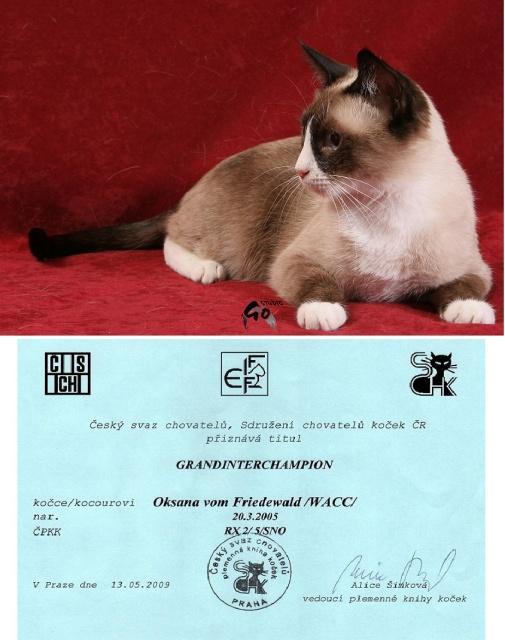 GIC Oksana vom Friedewald - Oksanka se stala Grandinterchampionem :O))