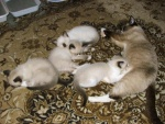 mamina Oksa s miminky// mom Oksa with babies