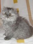 Violette alias Fialka