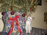 vánoční dáreček - Christmas gift