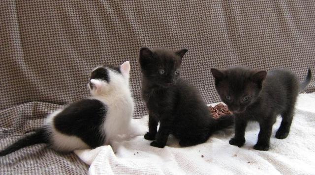 trio mlsných jazýčků..