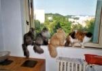 výhled z okna..to je věc!!//Look of the window - it is great ..:O))