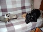kočkopsí siesta//cat´s - dog´s rest...