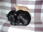 představuji Vám můj nový polštář/ May I to present you my new pillow?