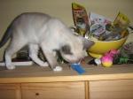 testujeme darované hračky/Ella controle birthday gifts