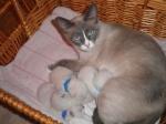 Elinka s jejími prvními koťátky / Ella with her first kittens