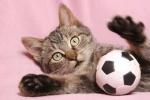 fotbalová hvězda Pepíno
