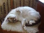 Broučkova siesta