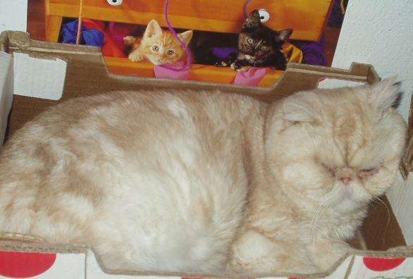 siesta v krabici