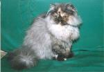 koťátko Cea Oro - naše