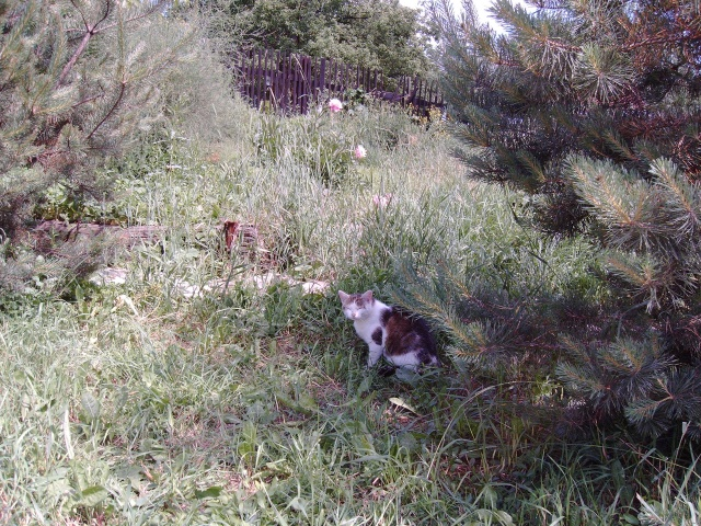 Míc myšilovka//Old Mic hunt a mouse