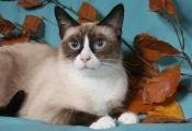 Náhled alba: Kočky/ Females