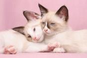 Náhled alba: Koťata/ Kittens