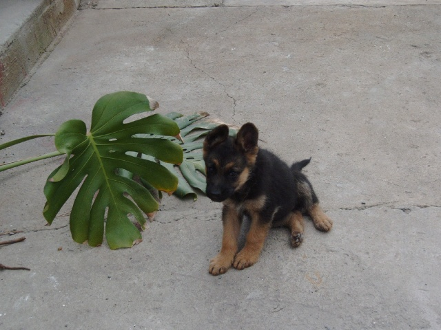 Nica - náš nový člen rodiny