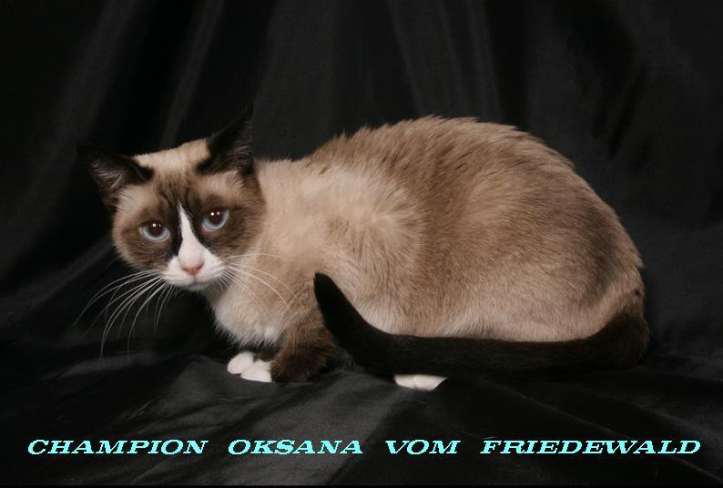 Champion Oksanka