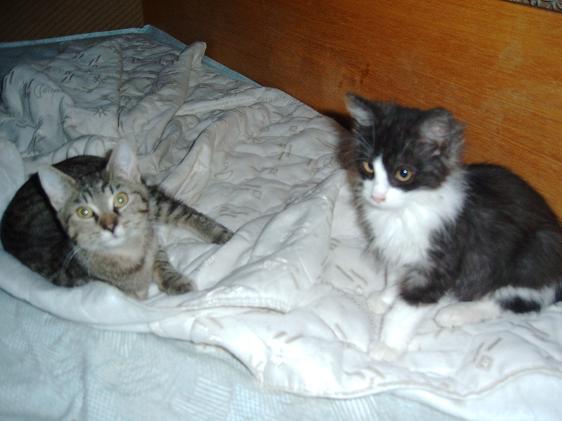 Betynka a Kiki si chystají pelíšek