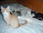 Jurášek, Betynka a Kiki před večerkou