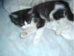 bývalý plášánek kočička Kiki
