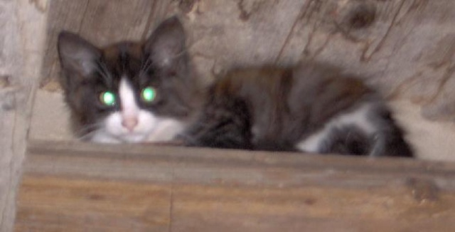kočička Kiki