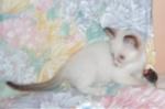 Taranga má myšku