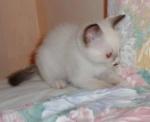 Taranga číhá na myšku