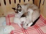 siesta s mamkou